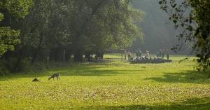 Wiese im Wildpark Ludwigshafen