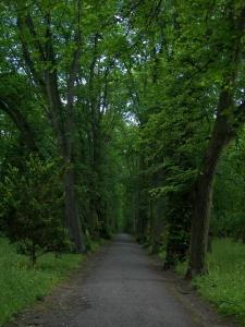 Wald PVH