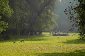 Ludwigshafen Wildpark Wiese