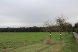 Hockenheim Reisergarten