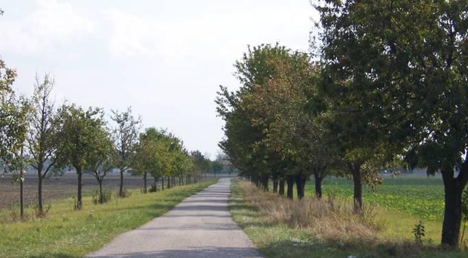 Hockenheimer Rheinebene Obstbäume
