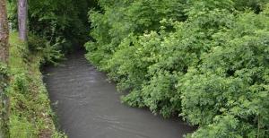 Hochwasser an Elsenz