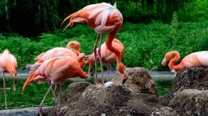 Heidelberg Flamingo