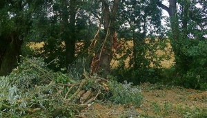 Sinsheim Sturmschäden
