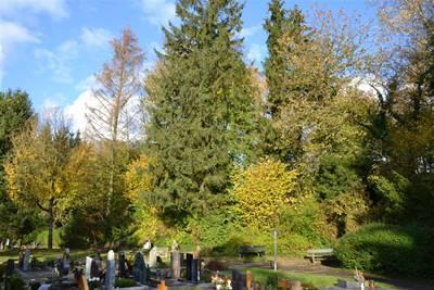 Friedhof Sinsheim Feld 21