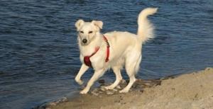 Hund Uferspaziergang