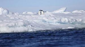 Pinguine auf Packeis