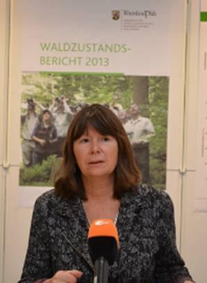 Waldzustandsbericht 2013