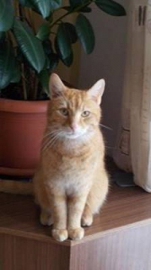 Katze Krümel