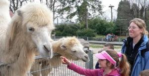 Heidelberg Zoo Kamelfüttern