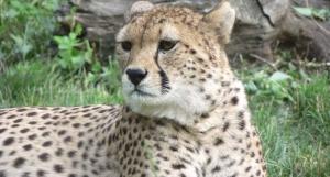 Landau Zoo