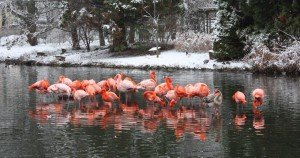 Flamingosee