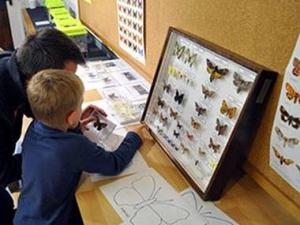 Offene Forschungswerkstatt Schmetterlinge