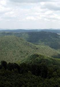 Pfälzerwald Panorama