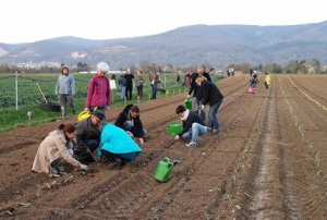 Gemüsegartensaison Heidelberg