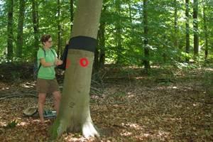 """Greenpeace-Aktion in Lampertheim: """"Schlechte Zeiten für alte Bäume"""""""