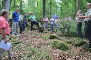 Bensheim: Schwarze Zahlen für den grünen Stadtwald