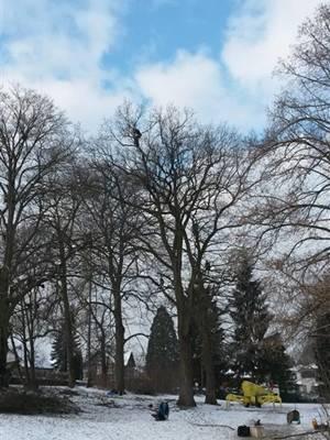 Bäume Ehrstädt