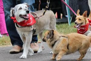Hunde-Futterlauf