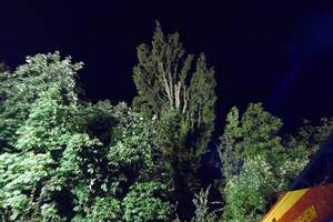 Feuerwehreinsatz Blitzeinschlag Pappel