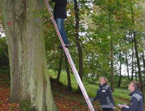 Sinsheim: Fledermäuse, Siebenschläfer und Waldbaumläufer