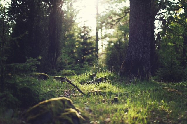 wood-nature-sunny-forest