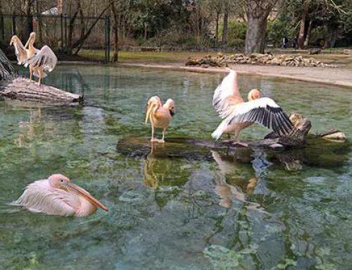 Die Vögel sind wieder draußen im Zoo Heidelberg