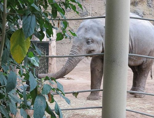 Keine Langeweile bei Elefanten, Affen, Robben & Co