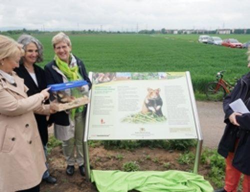 Mannheim: Neue Info-Tafeln zum Feldhamster
