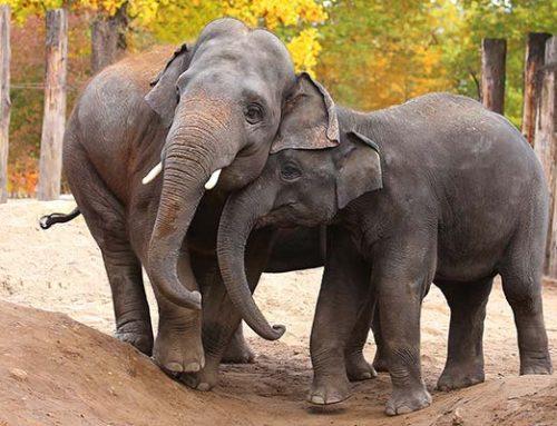 Welt-Elefantentag im Zoo Heidelberg