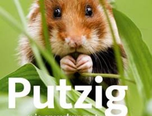 Mannheim: Feldhamster-Kampagne wirbt für Artenschutz