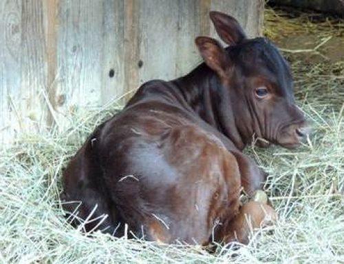 Zoo Landau: Erstes Jungtier des Jahres 2018 geboren