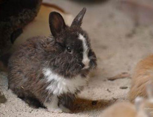 Heidelberg: Buntes Osterprogramm in der Zooschule