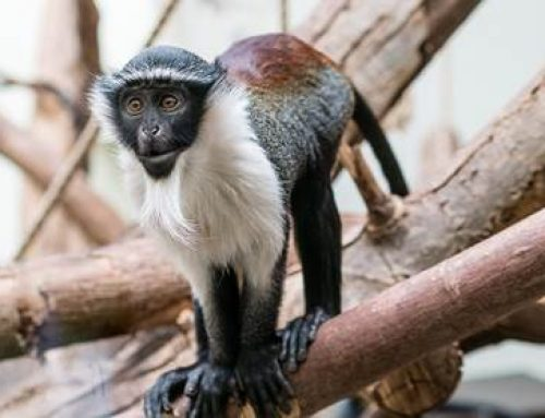 Heidelberg: Artenschutztag im Zoo am 4. März