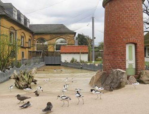 Küstenpanorama im Zoo Heidelberg wieder geöffnet