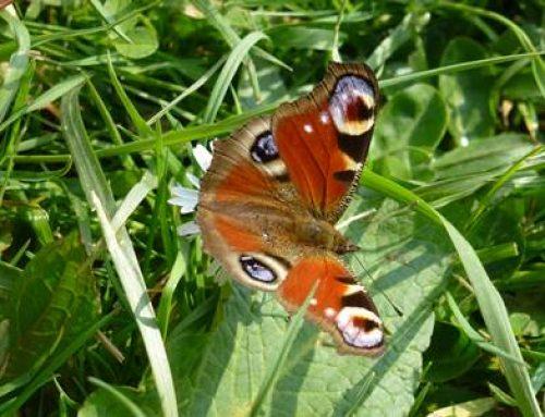 BUND-Kinder in Heidelberg: Bunte Wiesen für Schmetterlinge und Wildbienen