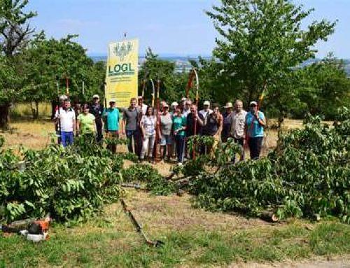 Sinsheim: Landschaftspflegetag auf dem Steinsberg