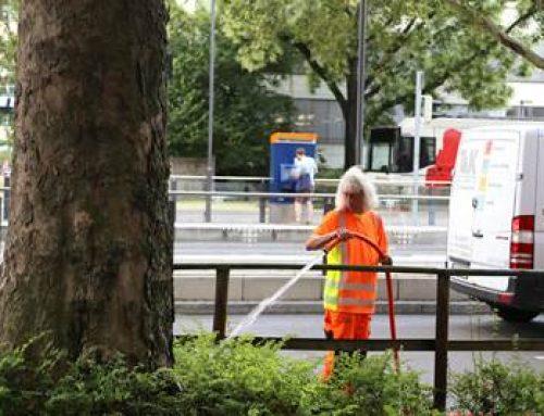 Heidelberg: Stadtgärtner sind mit Schläuchen und Tankwagen im Dauereinsatz
