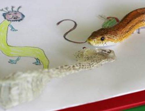 Heidelberg: Workshops für kleine Zoo-Fans zum Sommerferienbeginn