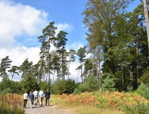 Landauer Stadtwald: Info-Austausch zwischen Stadtspitze und Forstverwaltung