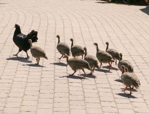 Erfolgreiche Adoption im Zoo Heidelberg