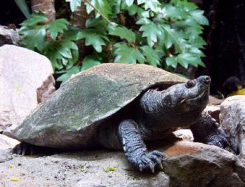 Landau: Sonntags-Zooführung zu Amphibien und Reptilien