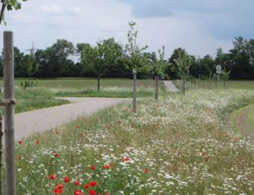 Speyer: Stadtrundgänge zu Grünflächen