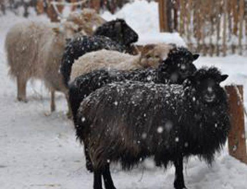 Landau: Erweitertes Angebot der Zooschule für die Kinderbetreuung in den Winterferien