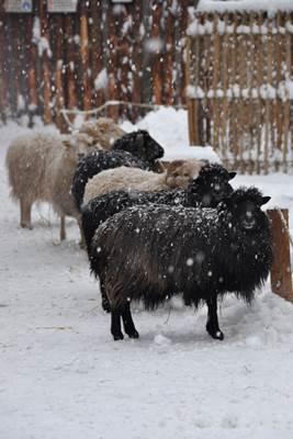 Zoo Landau im Winter