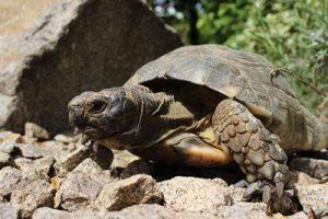Breitrandschildkröte Zoo Landau