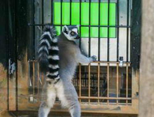 Zoo Heidelberg startet Crowdfunding-Aktion für Forschungsprojekt