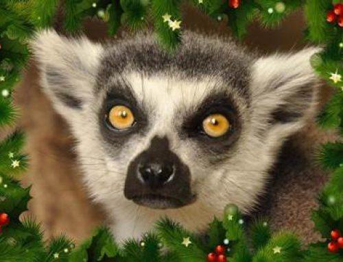 Landau: Wünsche wahrwerden lassen für die Tiere im Zoo