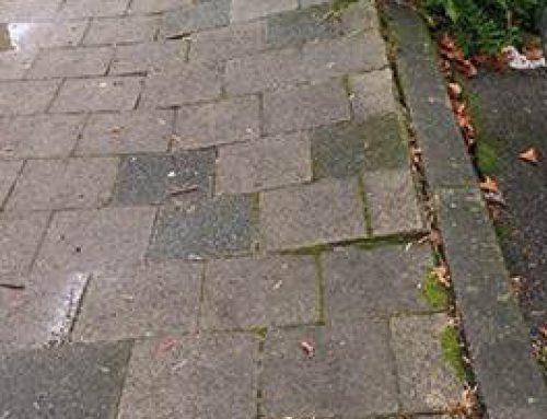 Heidelberg: Breslauer Straße – Sechs Bäume müssen gefällt werden
