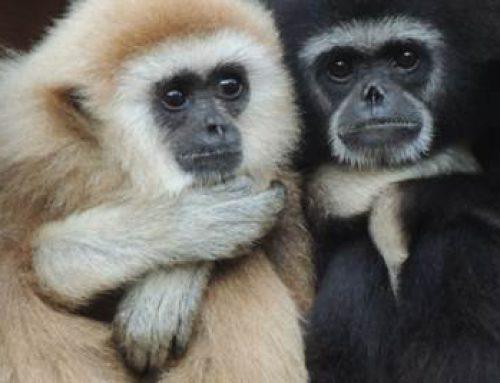 """Zoo Landau ist erneut Platinsponsor des """"Zootier des Jahres 2019"""""""